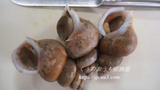 白バイ貝の捌き方