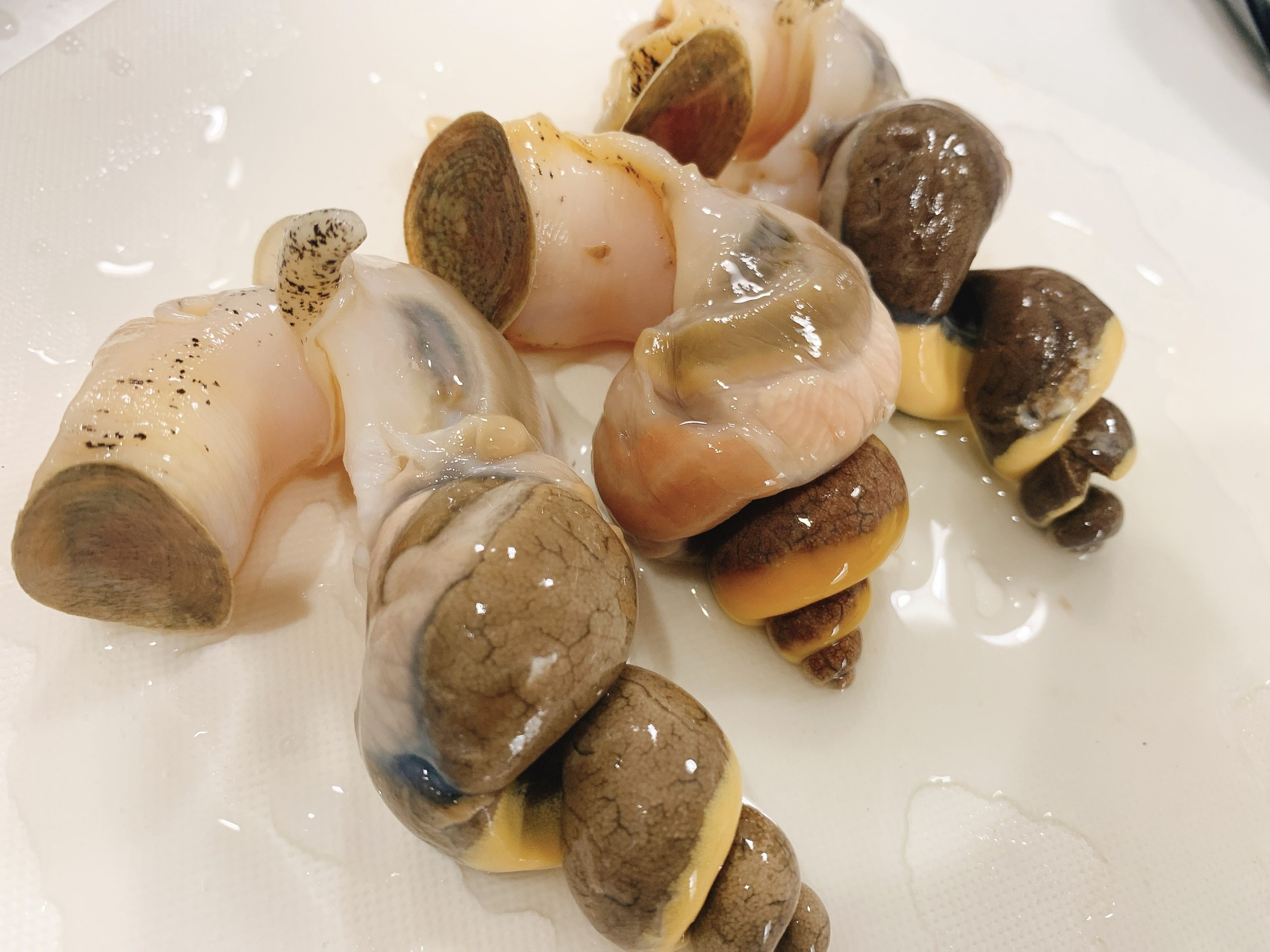 白バイ貝 殻の割り方